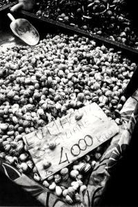 Vendita di lumache siciliane a Torino. Foto di M. Ravani e S. Ficarra, 1982