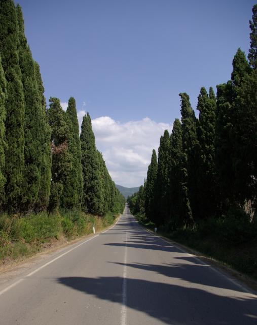 Bolgheri: il viale dei cipressi